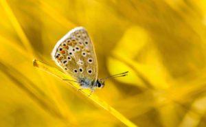 mozioni al lavoro, farfalla gialla